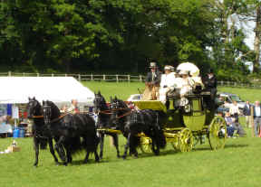 Lonsdale Park Drag & Friesian Stallion Team